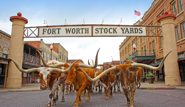 the-fort-worth-herd